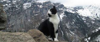 Кот спасает потерявшихся в горах туристов