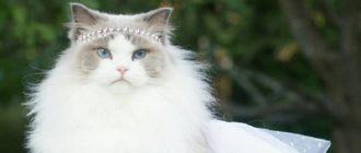 Знакомьтесь: Аврора, пушистая принцесса
