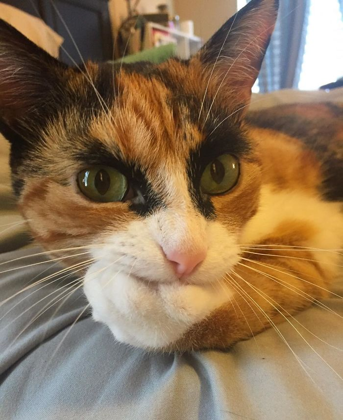 purrfect-eyebrows-2016-trend-is-present-in-the-pet-world-58087270e0b1e__700