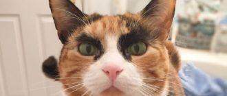 Кошка с бровями стала звездой Инстаграма