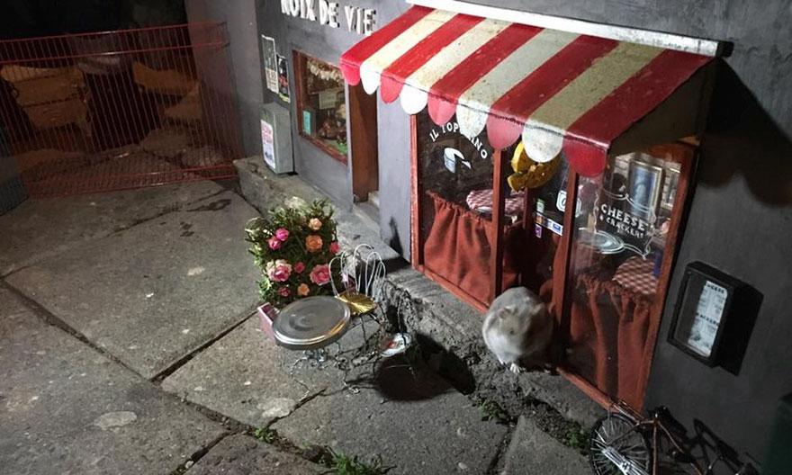 Магазин для грызунов открылся в Швеции
