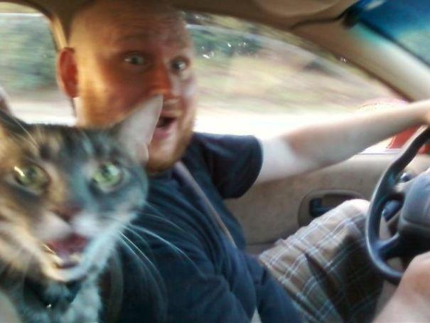 30 фото кошек, которые удачно оказались в кадре