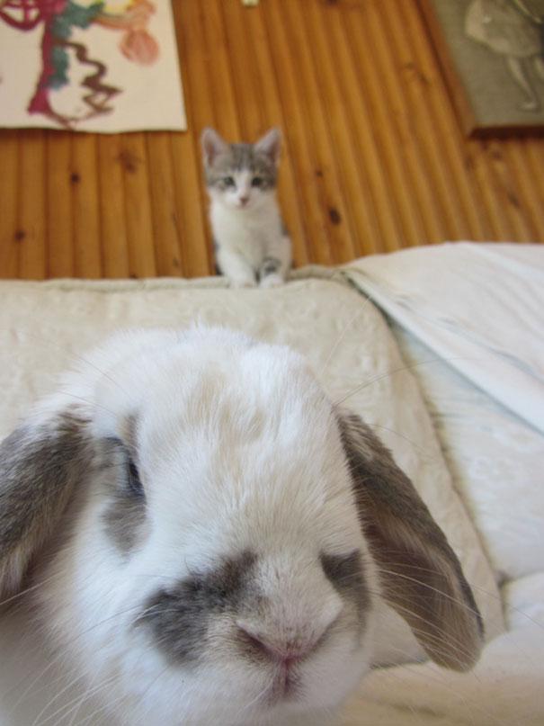 Пятничных котиков вам в ленту