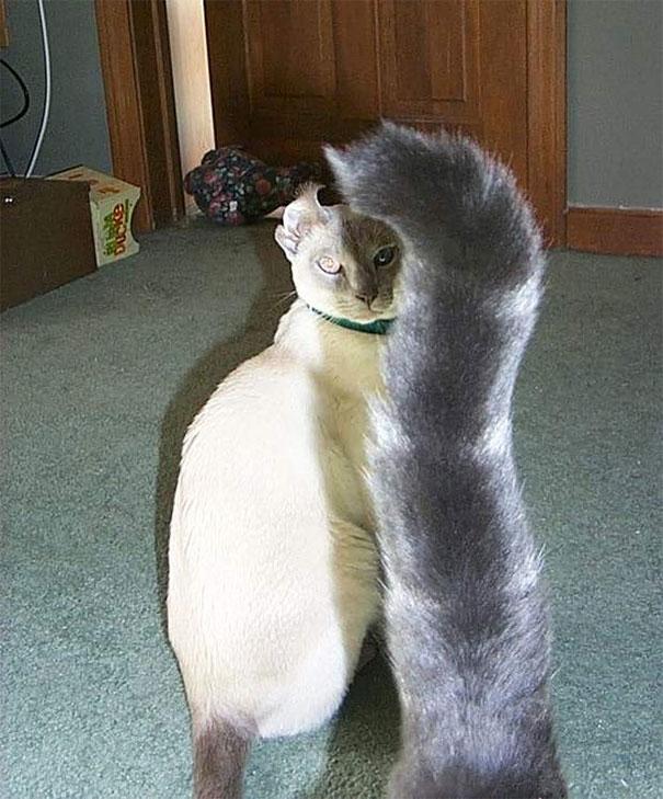 Традиционные пятничные котики