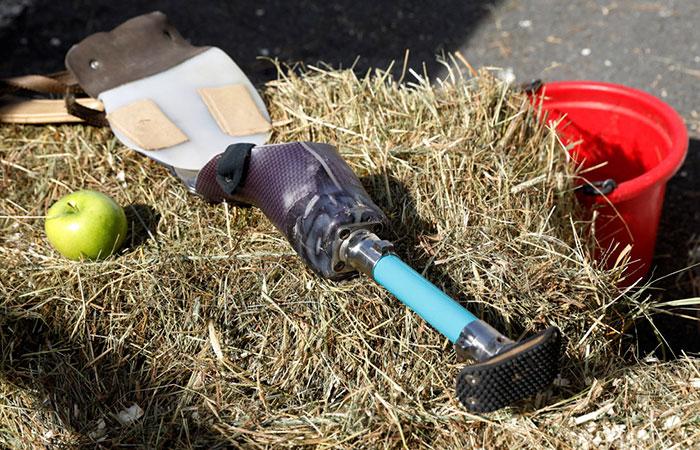 Протез для лошади