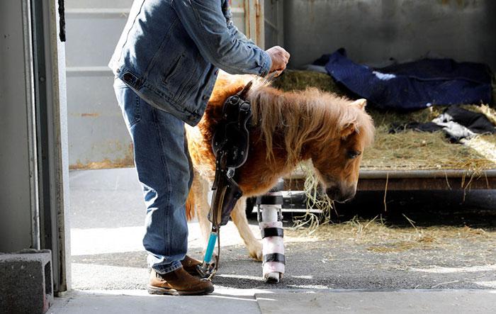 Лошадь с протезом