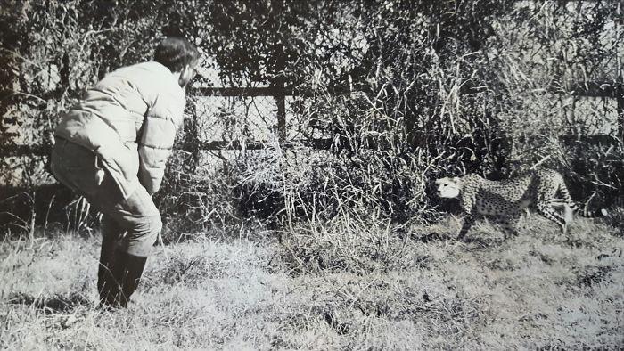 Мой папа дрессирует гепарда, 1979