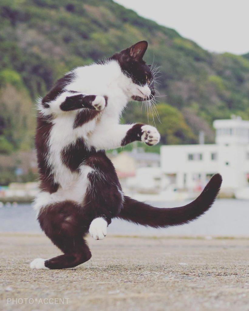 кошки-ниндзя
