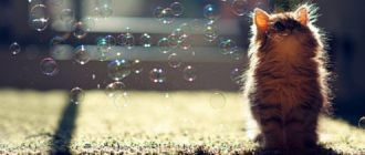 30 детенышей животных или милота зашкаливает