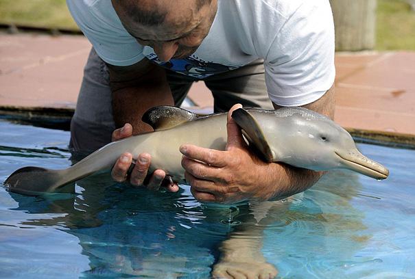 Детеныш дельфина
