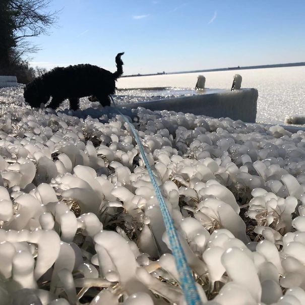 №11 Собаке холод не помеха