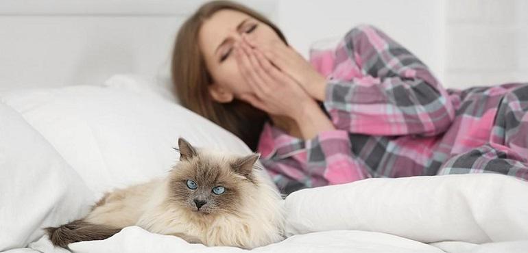 Безаллергенные кошки - ТОП-15 пород