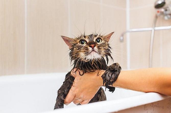 Уход за безаллергенной кошкой